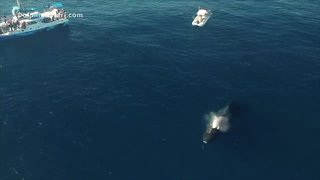 Increase in humpback whale sightings reported in SoCal