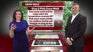 Geeking Out: Snow Mold