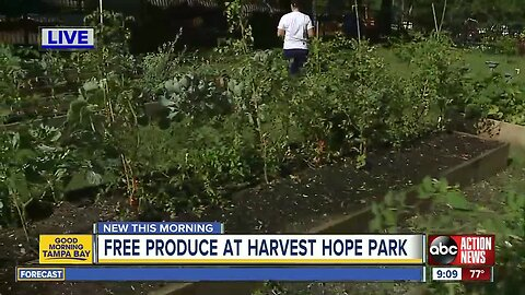 Free produce offered in University Area food desert