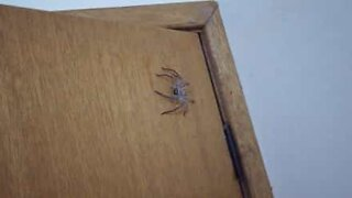 Householder warned of giant spider on the loose in bathroom
