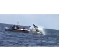 Boater Captures a Whale Breaching in Front of Another Boat Off New Jersey - Video