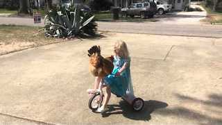 Adorable Three-Year-Old Gives Pet Chicken Tricycle Ride - Video