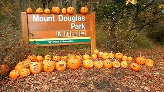 Hundreds of Carved Pumpkins Line Road in British Columbia - Video