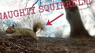 Naughty Squirrel Steals Man's GoPro - Video