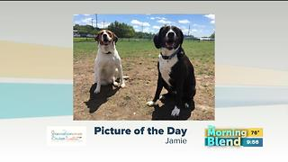 Wednesday's Picture of the Day - Video