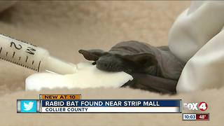Rabid Bat Found Near Strip Mall - Video