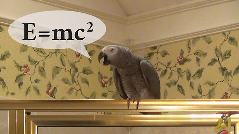 Einstein the Parrot states the Theory of Relativity