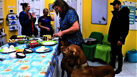 Veterinary clinic throws emotional goodbye party for three beloved dogs
