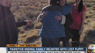 Dog returned to family after rollover crash in Flagstaff - Video