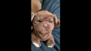 toy dog that acts realistic
