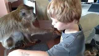 Boy Plays Tic-Tac-Toe With His Pet Monkey - Video