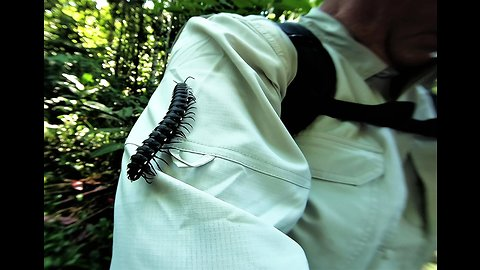 Tourists have close encounter with giant millipede in the Amazon