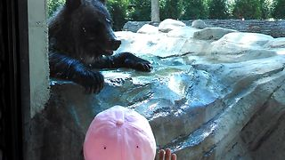 She Approaches A Bear At The Zoo. What Happens Next Is Shockingly Unpredictable - Video
