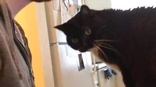 Cat owner shows why it's difficult working from home - Video