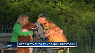 Keeping your pets safe on 4th of July - Video