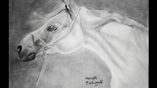 Drawing White Horse.