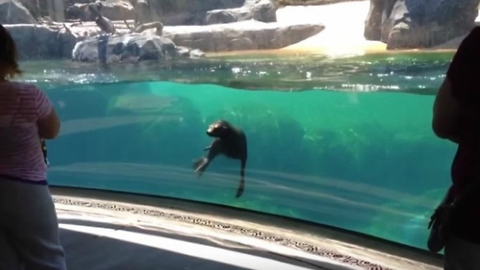 Little Girl Plays Tag With Sea Lion