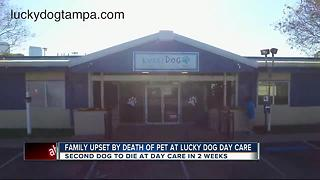 Family dog dies of heat stroke at doggy day care - Video