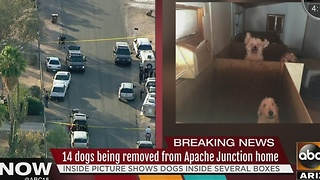 14 dogs removed from home in Apache Junction - Video