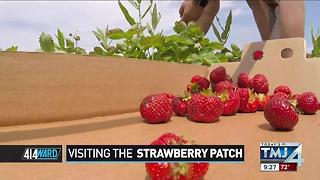 414ward: Visiting the strawberry patch