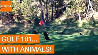 Golf 101... With Animals! - Video
