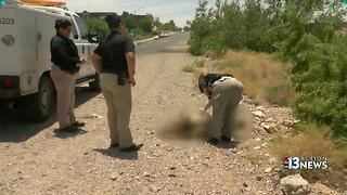 Two dogs found dead on the side of the road - Video