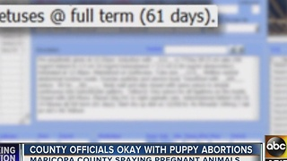 Maricopa County officials OK with shelter aborting unborn puppies - Video