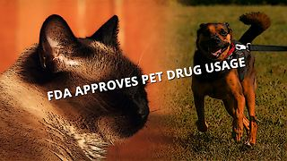 Pets will chill about fireworks thanks to new drug