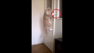 Cat opens door upon owner's command - Video