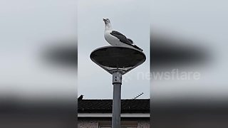 Woman has 'argument' with seagull - Video