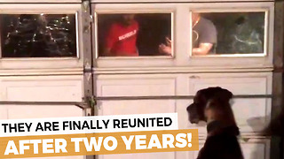 Man And Dog Reunited After 2 Years Apart - Video