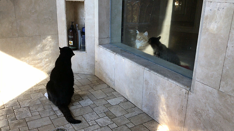 Cat watches in shock as his brother takes a shower