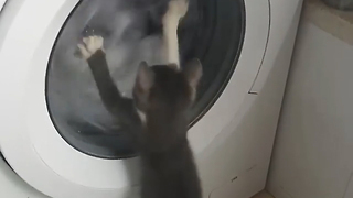Kitten gets mind blown by washing machine - Video