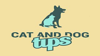 A Little Known Tip That May Aid Dog Training