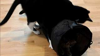 Cats Fun Tunnel Time - Video
