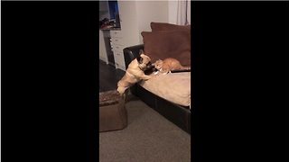 Confused dog thinks kitten is its puppy! - Video
