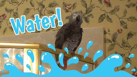 Parrot does spot-on imitation of water sounds