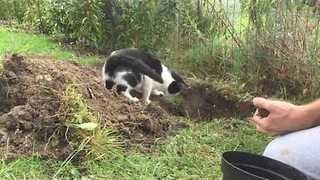 Gardening Cat Tries His Best to Help - Video