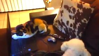 Dog and cat argue over who gets to use laptop - Video