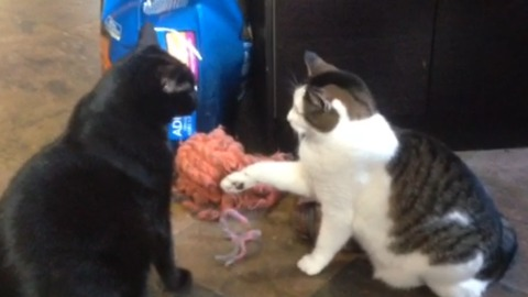 Kitty Considers Slapping Bigger Cat, Realizes It's Not A Good Idea