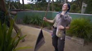 Koala Makes Chores Impossible - Video