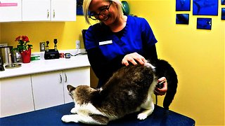 Vet technician begins exam on a cat and the two are beyond adorable!