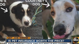 Is pet insurance worth the price? - Video