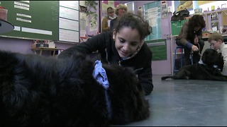 Dog Teachers - Video