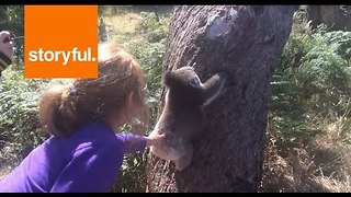 Kids Get Up Close and Personal With Koala Bear - Video