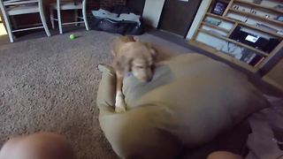 Puppy gives best reaction ever to new dog bed - Video