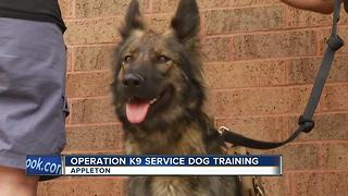 Operation K9 service dog training - Video