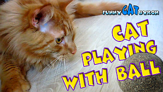 Funny Cat BYRON ❤️ Cat playing with ball