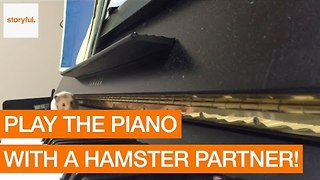 Hamster Decides to Join in Piano Recital - Video
