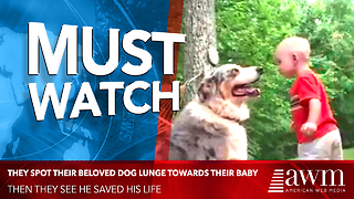 Out Of Nowhere They Spot Their Beloved Dog Lunge Towards Their Baby. Then They See He Saved His Life - Video